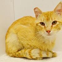 Adopt A Pet :: *KIMBALL - Sacramento, CA