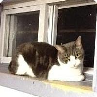 Adopt A Pet :: Mindy - bloomfield, NJ