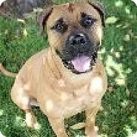 Adopt A Pet :: Jasper - Roy, WA