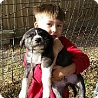 Adopt A Pet :: Butterball - New Boston, NH