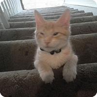 Adopt A Pet :: Skittles - Trevose, PA