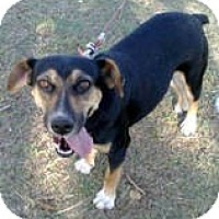 Adopt A Pet :: BELLA - Ridgewood, NY
