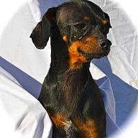 Adopt A Pet :: Mona - Blanchard, OK