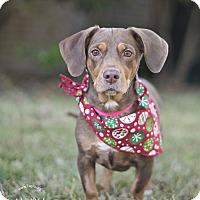 Adopt A Pet :: Dottie - Kingwood, TX