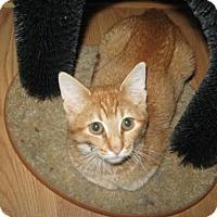 Adopt A Pet :: Sunny - Logan, UT