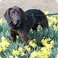 Adopt A Pet :: Duke Ellington - Atlanta, GA