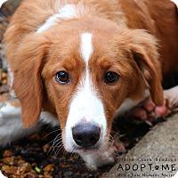 Adopt A Pet :: Taffy - Edwardsville, IL