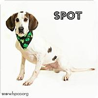Adopt A Pet :: Spot - Troy, VA