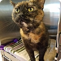 Adopt A Pet :: Omlette - Chambersburg, PA