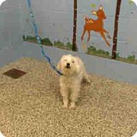 Adopt A Pet :: URGENT on 5/3 SAN BERNARDINO - San Bernardino, CA