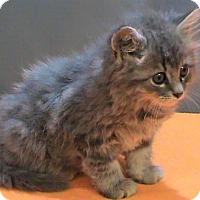 Adopt A Pet :: Feather - Maynardville, TN