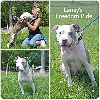 Adopt A Pet :: Laney - Pompano beach, FL