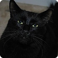 Adopt A Pet :: Stanley - Waxhaw, NC