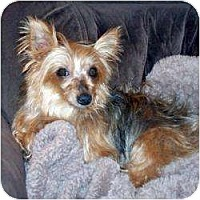Adopt A Pet :: Shelby - Fremont, CA