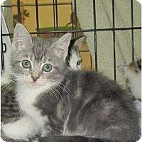 Adopt A Pet :: Aspen - Catasauqua, PA