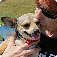 Adopt A Pet :: Tinkerbell - Scottsdale, AZ