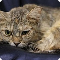 Adopt A Pet :: Momma Cass - Alexandria, VA
