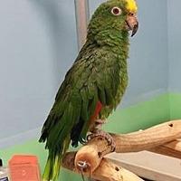 Adopt A Pet :: Maugua - Lenexa, KS
