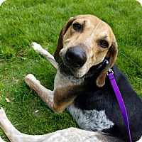 Adopt A Pet :: Chevy - Nanuet, NY