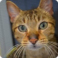 Adopt A Pet :: Kaden - Martinsville, IN