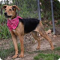 Adopt A Pet :: Sava - Aurora, CO