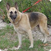 Adopt A Pet :: Zenzi - Citrus Springs, FL