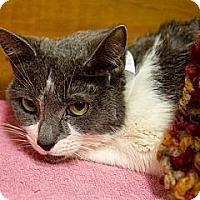 Adopt A Pet :: Octavia - Lancaster, MA