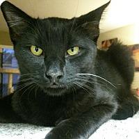 Adopt A Pet :: Jacob - Beverly Hills, CA