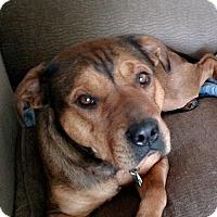 Adopt A Pet :: SASSY- PENDING ADOPTION - Birmingham, MI