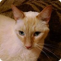 Adopt A Pet :: Arizona - Columbus, OH