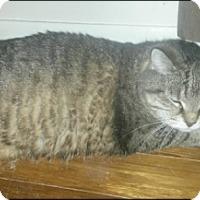 Adopt A Pet :: Princess - Brampton, ON