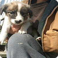 Adopt A Pet :: Becca - Girard, GA