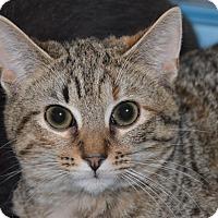 Adopt A Pet :: 10310186 - Brooksville, FL