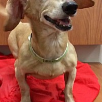 Adopt A Pet :: Odete - Weston, FL