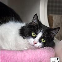 Adopt A Pet :: Guinevere - Albuquerque, NM