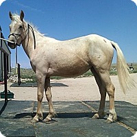 Adopt A Pet :: Nora - Larskpur, CO
