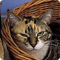 Adopt A Pet :: Dove - Chicago, IL