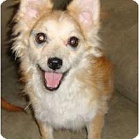 Adopt A Pet :: Playful...Leah - Leesport, PA