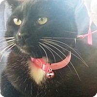 Adopt A Pet :: Luna - Pasadena, CA