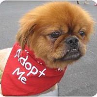 Adopt A Pet :: Colby-NJ - Mays Landing, NJ