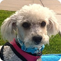 Adopt A Pet :: Pixie - La Costa, CA
