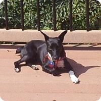 Adopt A Pet :: Pamela - Madison, WI