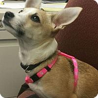 Adopt A Pet :: Dash - Ogden, UT