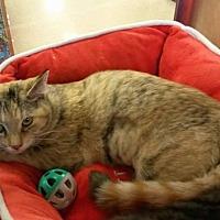 Adopt A Pet :: Skylar - McEwen, TN
