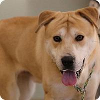 Adopt A Pet :: Roser/ foster to adopt - Hillside, IL