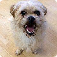 Adopt A Pet :: Chandler in CT - Manchester, CT