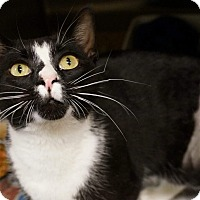 Adopt A Pet :: Steve - Monroe, GA