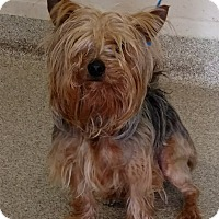 Adopt A Pet :: Willie - Troy, OH