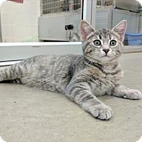 Adopt A Pet :: Izzy - Fort St. John, BC