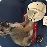 Adopt A Pet :: Padre - Tehachapi, CA